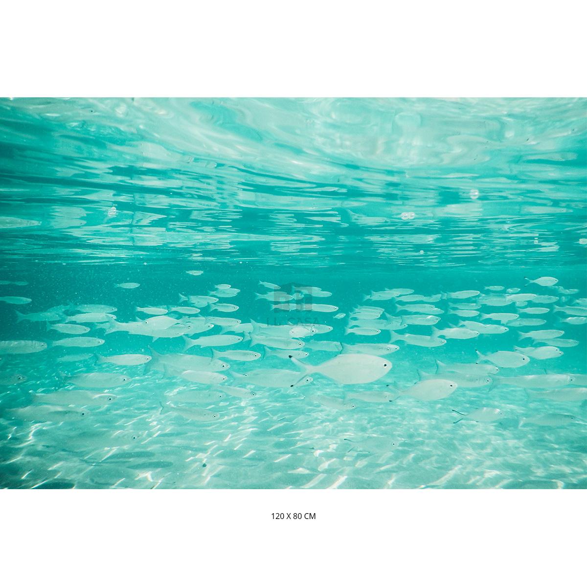 Acrylglas-Bild FISCHE